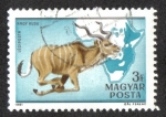 Stamps Hungary -  Fauna of Africa (1981)