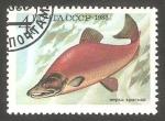 Sellos de Europa - Rusia -   5017 - Fauna marina