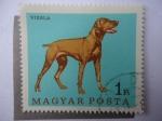 Stamps Hungary -  Vizsla - Magyar ^Posta.