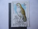 Stamps Hungary -  Fauna:Gyongybacoly-Tyto Alba - Magyar Posta.