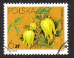 Sellos de Europa - Polonia -  Flores Local- Clematis