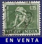 Sellos de Asia - India -  INDIA Plucking tea 0.15