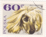 Sellos de Europa - Polonia -  perro de raza