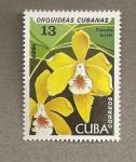 Sellos de America - Cuba -  Orquideas cubanas