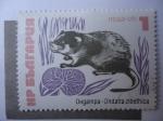 Sellos de Europa - Bulgaria -  Rata Almizclera - Ohgampa.ondatra zibethica.