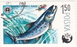 Sellos de Europa - Polonia -  pesca PZW salmón