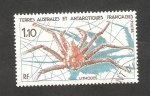 Stamps Europe - French Southern and Antarctic Lands -  140 - Crustáceo marino Lithodes