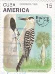 Sellos de America - Cuba -  UPAEP-Centurus superciliaris