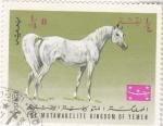 Sellos de Asia - Yemen -  caballo de raza
