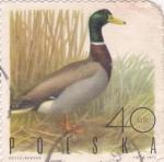 Sellos de Europa - Polonia -  Pato