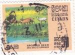 Sellos de Asia - Sri Lanka -  fauna