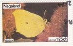 Sellos de Asia - Nagaland -  mariposa