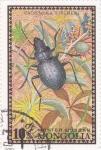 Sellos de Asia - Mongolia -  insecto-calosoma fischeri