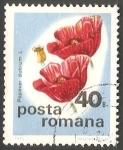 Sellos de Europa - Rumania -  Amapola