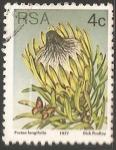 Sellos de Africa - Sudáfrica -  Protea longifolia