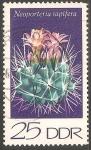 Stamps Germany -  Neoporteria. Rapifera