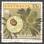 Sellos de Oceania - Australia -  Banksia serrata