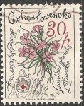 Stamps Czechoslovakia -  Rosa flores de la montaña