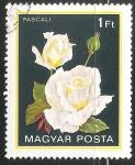 Stamps Hungary -  Rosa blanco