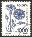 Sellos de Europa - Polonia -  Chaber bławatek