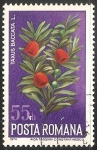 Stamps Romania -  Taxus baccata- tejo común