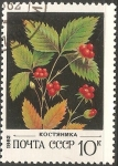 Stamps Russia -  grosella