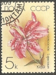 Sellos de Europa - Rusia -  Lilium speciosum