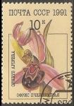 Sellos de Europa - Rusia -  Ophrys apifera-Orquidea abeja