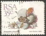 Sellos de Africa - Sudáfrica -  Dinteranthus