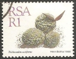 Stamps : Africa : South_Africa :  trichocaulon cactiforme