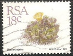 Stamps : Africa : South_Africa :  Faucaria tigrina