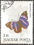 Sellos de Europa - Hungría -  Epiphile dilecta -Mariposas de la Amazonia y los Andes