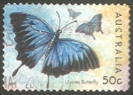 Sellos de Oceania - Australia -  Papilio ulysses
