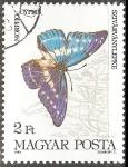 Stamps Hungary -  Morpho cypris