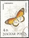 Stamps Hungary -  danaus chrysippus