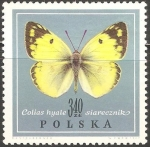 Stamps Poland -  colias hyale
