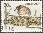 Sellos de Oceania - Australia -  litlle grebe