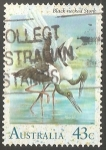 Sellos de Oceania - Australia -  Black necked stork-Cigüeña de cuello negro