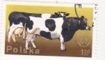 Sellos de Europa - Polonia -  vacas