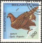 Stamps : Europe : Belarus :  Aquila chrysaetos-águila real