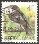 Sellos de Europa - Bélgica -  Ficedula hypoleuca-papamoscas cerrojillo