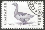 Sellos de Europa - Bulgaria -  Ánsar común-ganso común