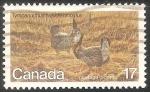 Sellos de America - Canadá -  Tympanuchus cupido-Gallo de las praderas