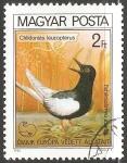 Sellos de Europa - Hungría -  Chlidonias leucopterus-Golondrina de mar Blanco