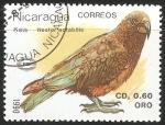 Sellos de America - Nicaragua -  Nestor notabilis