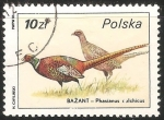 Sellos de Europa - Polonia -  phasianus cochicus-faisan comun