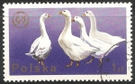 Stamps Poland -  Ganso