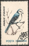 Sellos de Europa - Rumania -  Parus cyanus-herrerillo azul