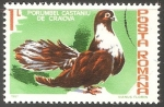 Sellos de Europa - Rumania -  Porumbel castaniu de craiova-paloma gris de Craiova
