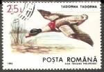 Sellos de Europa - Rumania -  Tadorna tadorna